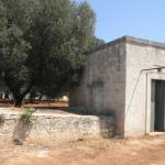 casa di campagna in buono stato con ulivi in vendita in puglia