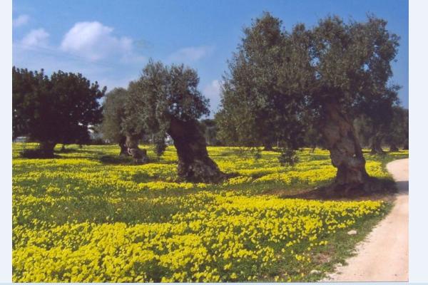 Masseria-5-Km-da-Ostuni_10