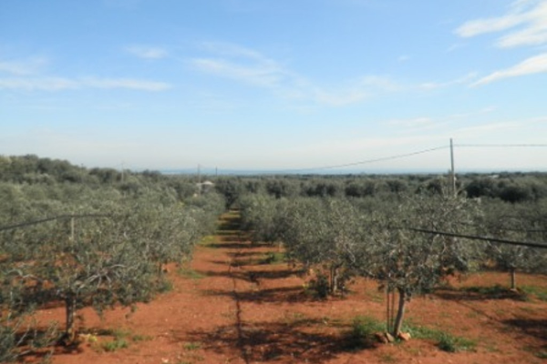 land sea view with the possibility of new construction for sale in Ostuni