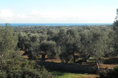 terreno con ampia vista mare in vendita in puglia