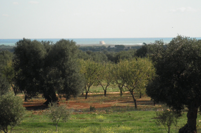 land for new construction for sale near the nature reserve in Puglia