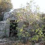 trulli con ulivi e possibilità di ampliamento in vendita vicino ad ostuni in puglia