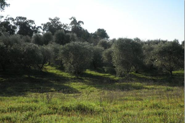 villa-mq-70-allo-stato-rustico02