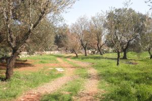 Trullo with land and expansion project for sale near Carovigno