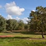 Land mit Olivenbäumen und die Möglichkeit, neue konstruktion zu verkaufen in der Nähe von Carovigno