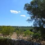 terreno edificabile con ulivi in vendita in Puglia