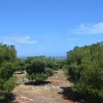 mark för bebyggelse med havsutsikt och olivträd till salu i Puglia